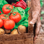 Organik Ürün Satış Siteleri
